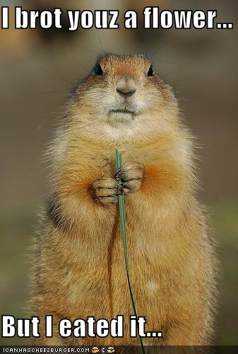 funny-pictures-groundhog-ate-flower
